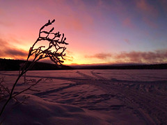 Morning light from a Finnish winter sunrise (lewi1553) Tags: nature fragility wintwr pastelsky pink purple colour color nopeole wilderness cold snow frozen landscape clouds finland frozenlake