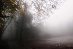 fog and shadows (VI) (ibethmuttis) Tags: fog shadows trees sky forest road landscape fall montseny park