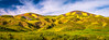 High Res 21,000 MP Wide! California Spring Wildflowers! Superbloom Carrizo Plain National Monument! God Spilled the Paint Desert Wildflowers Super Bloom! Temblor Range! (45SURF Hero's Odyssey Mythology Landscapes & Godde) Tags: california wildflowers superbloom carrizo plain national monument god spilled paint desert super bloom