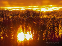 Winter woodland sunset (Martin Kelly UK) Tags: sun dusk trees woodland sundown sky orange burning blazing blaze silhouette