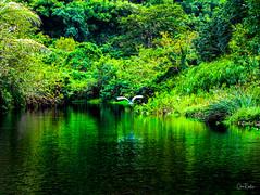 Hawaii-WaipioValley-88.jpg (Chris Finch Photography) Tags: jungle hawaiiphotography waipio taro waipiovalley hawaii landscapephotographs landscapephotography utahphotographer chrisfinch tarofarms chrisfinchphotography photographs bigisland tropical tarofarm wwwchrisfinchphotographycom valley