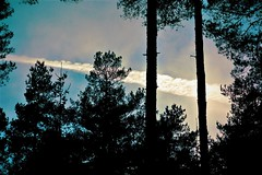 turboprop? (camerito) Tags: trees bäume kondensstreifen condensation trail forest sky himmel wald camerito nikon1 j4 flickr unlimitedphotos