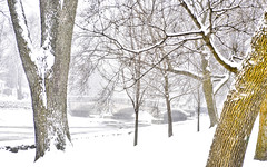 gow's bridge (DeZ - photolores) Tags: winter gowsbridge guelphcanada royalcitypark trees snow hdr nikon nikond610 tamron90mmf28 bridge dez
