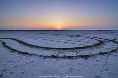 Markings | Great Rann of Kutch (_Amritash_) Tags: sunset sunsetcolors sunsetsky markings tyremarks greatrannofkutch kutch rannofkutch gujarattourism gujarat evening travel travelindia