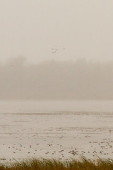 Dixon_JB_460_3970 (Joanne Bouknight) Tags: dixonwaterfowlrefuge illinois mist morning observationtower rain storm thewetlandsinstitute