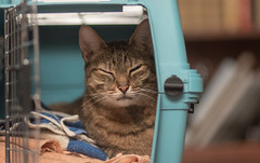 196: Sleepy Cat