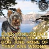 I have the best dog. Click love if you do too. (itsayorkielife) Tags: itsayorkielife yorkie yorkielove yorkiememe yorkshireterrier