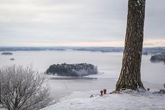 Pispala (Markus Heinonen Photography) Tags: pispala pyhäjärvi puu tree järvi lake waterscape landscape tampere suomi finland jää ice europe saari island saunasaari