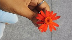 Um pouco de cor - Letters to Summer (Lemon Mousse!) Tags: flor flower sweet feeling documentyourlife meusvinte mytwentyyears