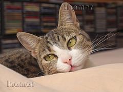 Kiwa (Marina-Inamar) Tags: gato felino kiwa ojos bigotes