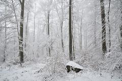 Quand la forêt se transforme en paradis blanc (Excalibur67) Tags: nikon d750 sigma globalvision 24105f4dgoshsma paysage landscape forest foréts arbres trees nature snow neige brume brouillard vosgesdunord