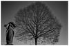 Pracht (S SCH) Tags: siegfried schmid schwarzundweis shadow schweinfurt monochrome monochrom maria blackandwhite blackanwhite bw outdoor baum tree