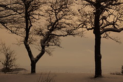 Staying in the Wind (Sergei P. Zubkov) Tags: winter trees snow january
