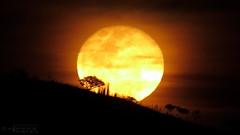 Luna - Moon 01Feb20185 (N3T0V) Tags: lunamenguante moon luna waningcrescent waningmoon nubes dark sky night noche cielo chiapas méxico astronomia astronomy astrofoto astrophoto talkingtothemoon chiapasmeteo canon canonmexicana landscape panorama nature awesome cloud frebrero frebrero2018