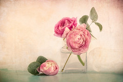Pink Ranunculus (Ro Cafe) Tags: stilllife flowers blooms ranunculus pink bottle romantic vintage shabby pastelcolours green beautiful textured nikkormicro105f28 nikond600