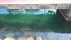 Vissen - Pescados (arnoldvdm) Tags: spanje españa elcampello pescados vissen water agua