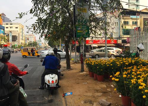 Marigolds - Cambodia