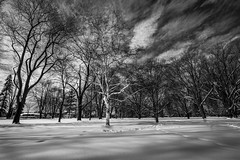 One Tree To Rule Them All (SNAPShots by PJW *Join LNP*) Tags: tree bw blackwhite bnw noiretblanc contrast nature landscape lines patterns texture detail dof depthoffield snow white winter cold ice sky clouds