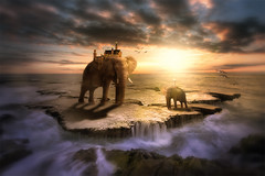 Family outing (cozmicberliner) Tags: family baby group beautiful sunset sea birds rock summer evening elephant landscape idea sky surreal colorful conceptual friend water shadow walking uniqueness imagination travel strength mammal