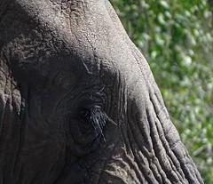 in Kruger Nat Park