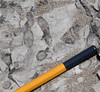 Corais (Praia da Mareta)-8.jpg (correia.nuno1) Tags: jurássico corais praias praiadamareta geologia fósseis rochassedimentares estratigrafia zonascosteiras petrografia geodinâmicaexterna somatofósseis ocupaçãoantrópica baciadoalgarve mesozoico portugal