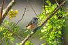 Tufted Titmouse (NancySmith133) Tags: tuftedtitmouse frontyardbirds centralfloridausa sprinklers winterbirds