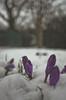 IMGP1082 (Alistair Prentice.) Tags: pentax q portadown batch sledge snow prentice