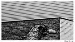 Oiseau en colère / Angry bird (Thierry De Neys - Photographies) Tags: thierrydeneys noiretblanc bw nb blackandwhite oiseau bird colère angry bozevogel vogel boze façade graf fresque fresco graphisme gand ghent gent flandreorientale voorzijde facade belgique belgïe belgium flandre flanders oeil bec eye plume oog snavel veer beak feather brique baksteen brick mur muur wall tag graffiti