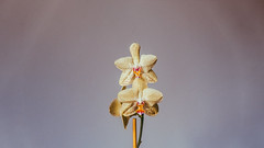 18.12.2017 (Fregoli Cotard) Tags: orchid flower minimal minimalisticdesign greybackground liveminimal livesimple bloom flowered dailyjournal yellowflower floral minimalflowers closeup everydayphoto intheoffice dailyphotography dailyproject dailyphoto dailyphotograph dailychallenge everyday everydayphotography everydayjournal aphotoeveryday 365everyday 365daily 365 365dailyproject 365dailyphoto 365dailyphotography 365project 365photoproject 365photography 365photos 365photochallenge 365challenge photodiary photojournal photographicaljournal visualjournal visualdiary 352365 352of365