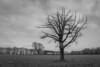 Tree Black & White (***tuttifrutti***) Tags: stark blackwhite canon 5d 5dmkiii canon5dmkiii canon5dm3 canonlenses canon2470mm canon2470mmf28l