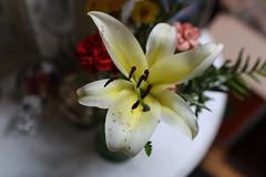 still (ktmqi) Tags: flower stilllife plant lily