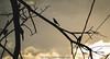 Nevermore (Lex Arias / LeoAr Photography) Tags: 2018 ave aves barquisimeto bird birds edgarallanpoe iglexariasphotos leoarphotography lexarias literatura nevermore nikon nikond3100 pajaro poe venezuela