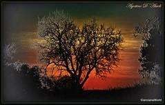 Al tramonto di Febbraio - 2018 (agostinodascoli) Tags: agostinodascoli alberi cianciana sicilia photoshop photopainting texture nature art digitalart digitalpainting nikon nikkor sunset landscape paesaggi cielo tramonto febbraio inverno rosso alberodimandorlo