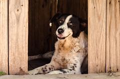 Terry (BrenBlur) Tags: argentina dog wood street cordoba