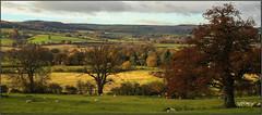 Autumn Landscape.. (Picture post.) Tags: landscape nature green autumn sheep trees hills fields castle clouds bluesky paysage arbre sunlight shadows oak