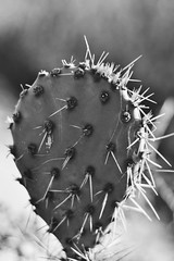 (sydney ☆ singh) Tags: cactus 50mm