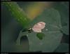 Bug (Falcdragon) Tags: sonya7riialpha ilce7rm2 newzealand hamilton tamronspaf90mmf28dimacro ladybug insect bug macro bokeh