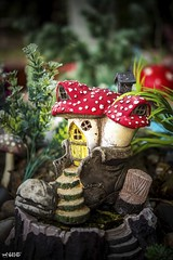 My Kind of House (red stilletto) Tags: bluelotuswatergarden lotusgarden yarravalley yarrajunction flower flowers summer macro fairygarden shoe boot mushroom fairy fairies toadstool