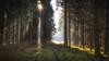 Follow me into the Woods - 11/365 (der_peste) Tags: forest sun sunlight raysoflight godrays sunrays mist fog mood moody foggy misty woods woodland trees autumn fall winter