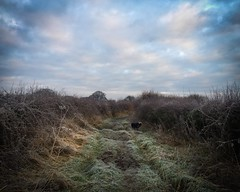 Dog down a long cold path... (Wizard Snaps) Tags: freeze lane grass dog cold ice icy iphone 6s landscape football pet collie track haighton preston winter frozen