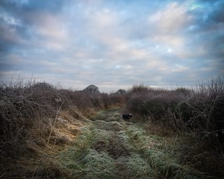 Dog down a long cold path...