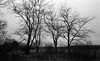 Few lonely trees (Rosenthal Photography) Tags: dezember landschaft ilforddelta3200 bnw asa3200 schwarzweiss zeven olympusom2 kleinbildformat ff135 nordwestring städte bw rodinal125 winter analog 20171203 dörfer siedlungen landscape december nature tree trees lonelytree olympus om2 fzuiko zuiko autos 50mm f18 ilford delta delta3200 rodinal 125 epson v800