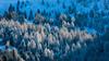 Blue forest (Nicola Pezzoli) Tags: dolomiti dolomites unesco val gardena winter snow alto adige italy bolzano mountain nature december blue forest shadow light ciampinoi monte seura