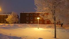 IMG_4339 (Mr Thinktank) Tags: raureif frost