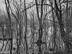 Darkness (Inapapel) Tags: 2018 araba flickr landscape nature salburua winter darkness tinieblas bw blackandwhite zuribeltzean bn outdoorphotography wildlive 500