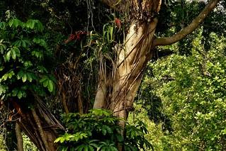 INDONESIEN, Im botanischen Garten von Bogor, 17056/9509