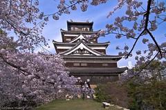 Spring's Hiroshima Castle - Japan (Yiing Juii) Tags: japan 廣島 hiroshima