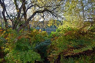Lagoon forest in autumn