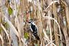 november 2017 lake katherine (timp37) Tags: bird lake katherine illinois november 2017 palos