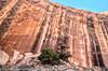 Impressive rock wall coloring (Alaskan Dude) Tags: travel utah moab arch coronaarch landscape nature scenery bowtiearch